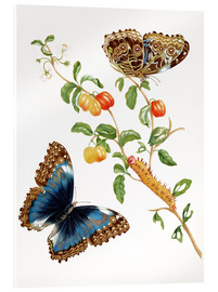 Akrylbilde  Branch Of West Indian Cherry With Achilles Morpho Butterfly - Maria Sibylla Merian