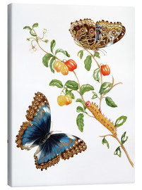 Lerretsbilde  Branch Of West Indian Cherry With Achilles Morpho Butterfly - Maria Sibylla Merian