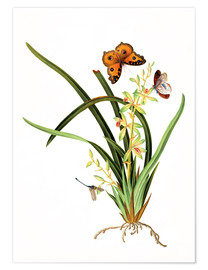 Plakat  Butterflies and a dragonfly on a plant