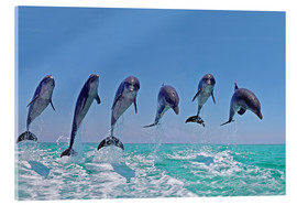 Akrylbilde  6 dolphins jump out of the water - Gérard Lacz