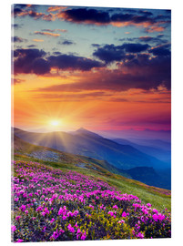 Akrylbilde  Rhododendron blossom in the Carpathians