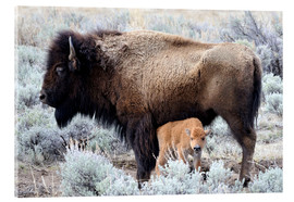 Akrylbilde  Bison cow with calf