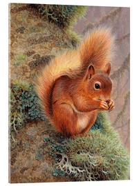 Akrylbilde  Squirrel with nut - Ikon Images