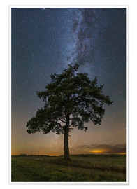 Plakat Lonely tree under the Milky Way