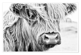 Plakat  Highland cattle - gentle look - Art Couture
